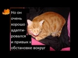 добаляйте себе, если жалко кота  Minika